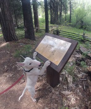 dog and sign on wawona meadow loop trail